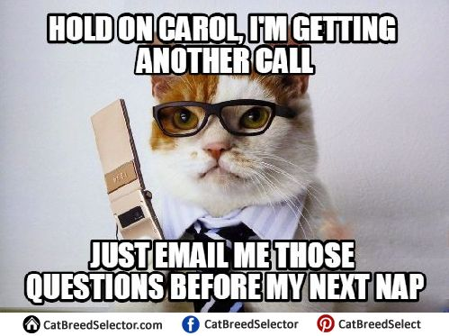 Pictures of Business Cat Memes