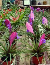 Image result for bromeliad flower