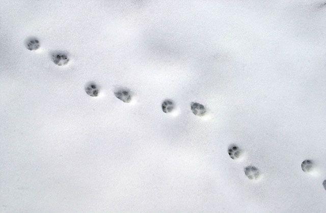 De jolies traces dans la neige ©Maykan