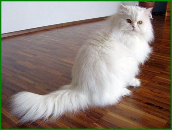 Daftar Terbaru 27 Nama Kucing Betina Islami Terbaik Daftarhewan Com Di 2020 Kucing Kucing Betina Kucing Persia