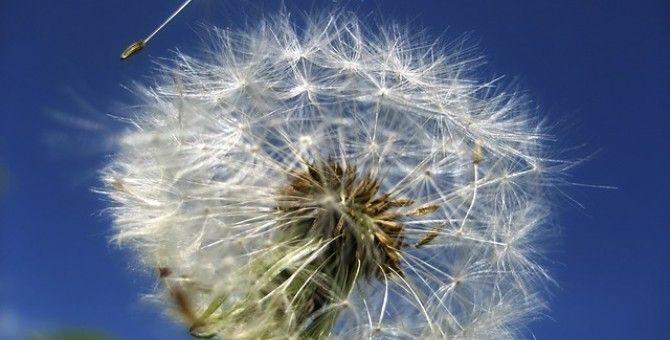 seed food 7
