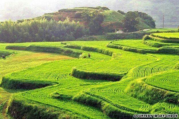 Hapcheon Daraknon rice fields | I Love Korea! | Pinterest ...