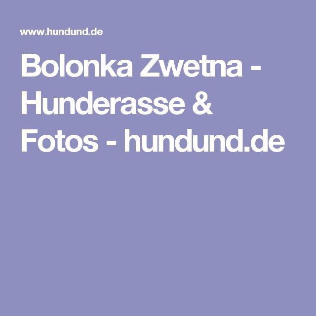 Bolonka Zwetna - Hunderasse & Fotos - hundund.de