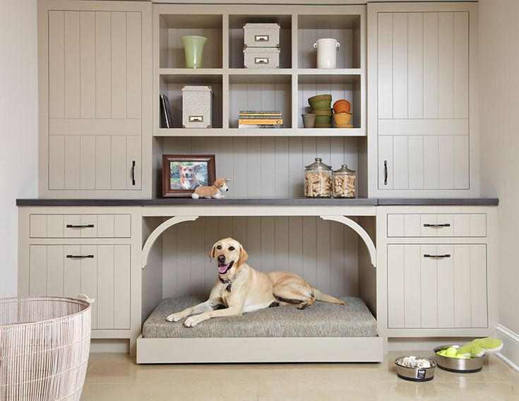 Decorating Ideas: Making a Pet-Friendly Home | Traditional Home - Casa Verde Design/Rosemary Merrill Minneapolis  MN