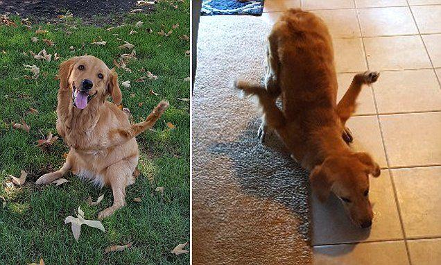 California couple close to raising $20K for dog with backward legs