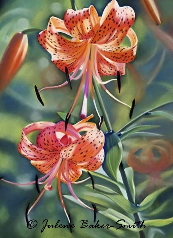 Tiger Lily Fine Art Print. Pastel | Art Flowers ...