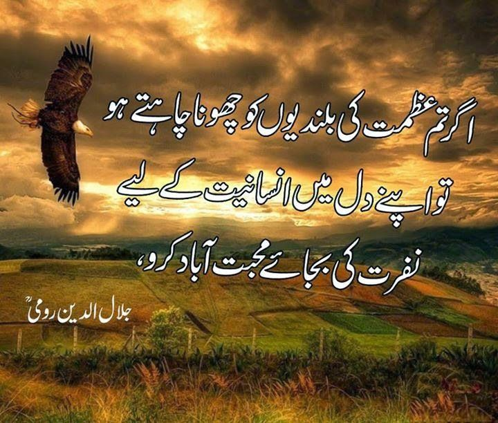 Best Poetry Quotes Of Love In Urdu: Maulana Rumi Quotes And Sayings In Urdu