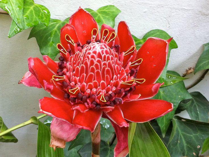 Tirei uma foto de uma flor muito linda e queria saber o nome dela. Nunca vi igual!
