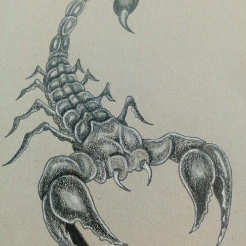 Scorpion drawing | drawings | Drawings, Tattoo quotes, Art
