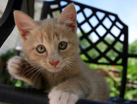 Meet Beavis! In honor of National Pet Day, repin this if you're a cat lover.