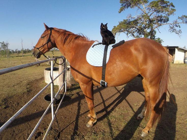 Sono passati due anni da quando  Morris e Champy  si sono conosciuti in una fattoria dell'Australia del Nord e da allora sono inseparabili. Un'amicizia strana quella tra un cavallo e un gatto nero, che ogni giorno sale in groppa al suo amico e assieme a lui gironzola per i campi. Un legame che ha co