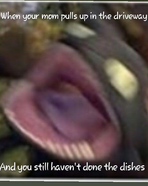 Excuse My Poor Meme Editing Meme Toothless Httyd Relatable