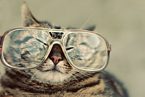 .Hipster Cat, Kitty Cat, Glasses, Funny Stories, Funny Cat, Adorable Kittens, Cute Cat, Eye, Animal