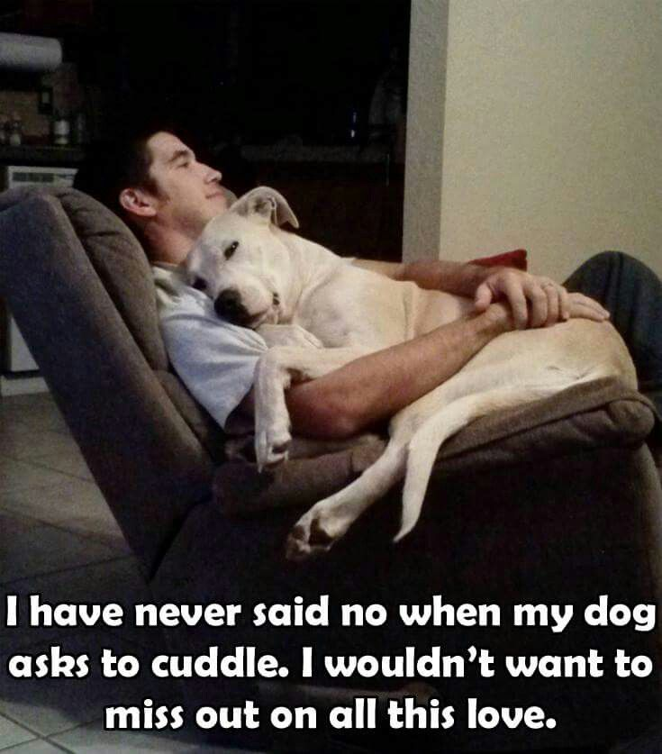 Yes yes yes. Someday will miss that dog always trying to get in my lap. Even if he is far from a lap dog :)