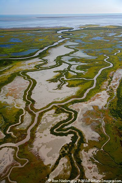 Aerial Photo of Copper River Delta, Chugach National Forest-Ron Niebrugge/WildNatureImages.com-  this is the area that will be affected by the Copper River Mine.