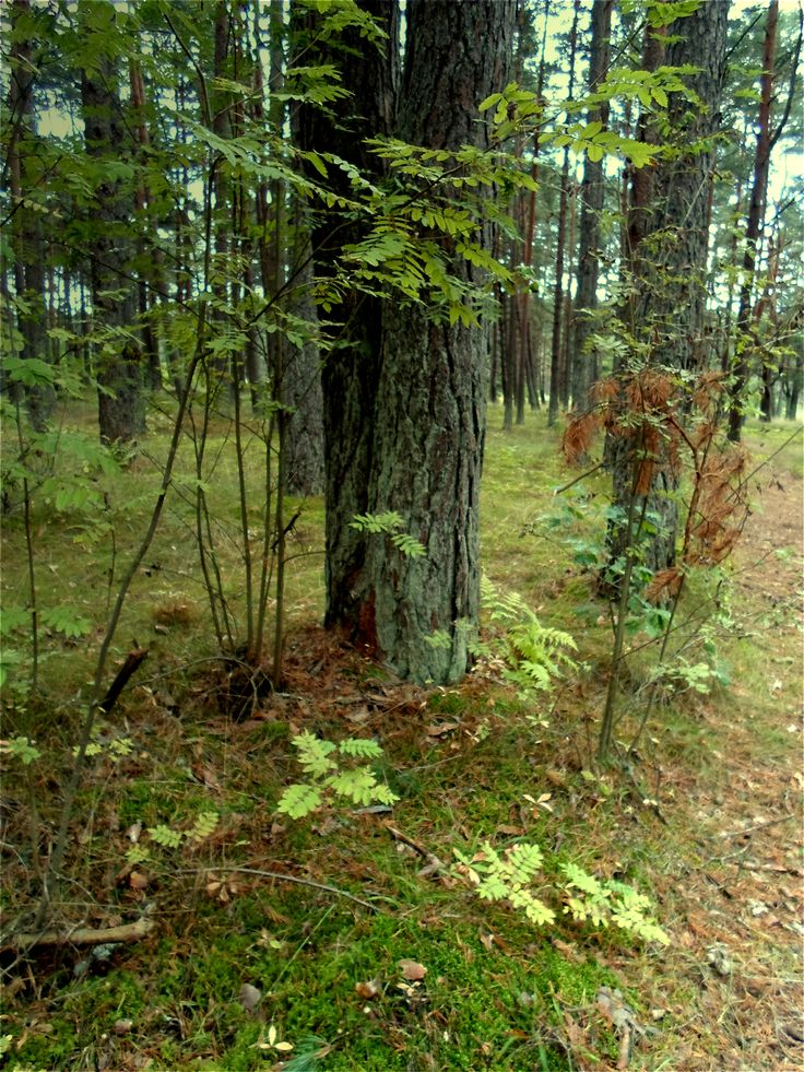 Pin by Masyon Harda on Forest stock Tree, Plants, Forest