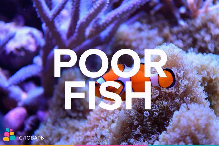 Poor fish — жалкая личность, бесхарактерный человек  Poor |pɔːr| — бедный, неимущий  Fish |fɪʃ| — рыба, ловить рыбу, рыбачить   Примеры:  I made a poor fish of myself / Я выглядел совершенно жалко.  I'm tired of being nice to every poor fish around here / Мне уже надоело заискивать тут перед каждым жалким человечишкой.  #жалкий