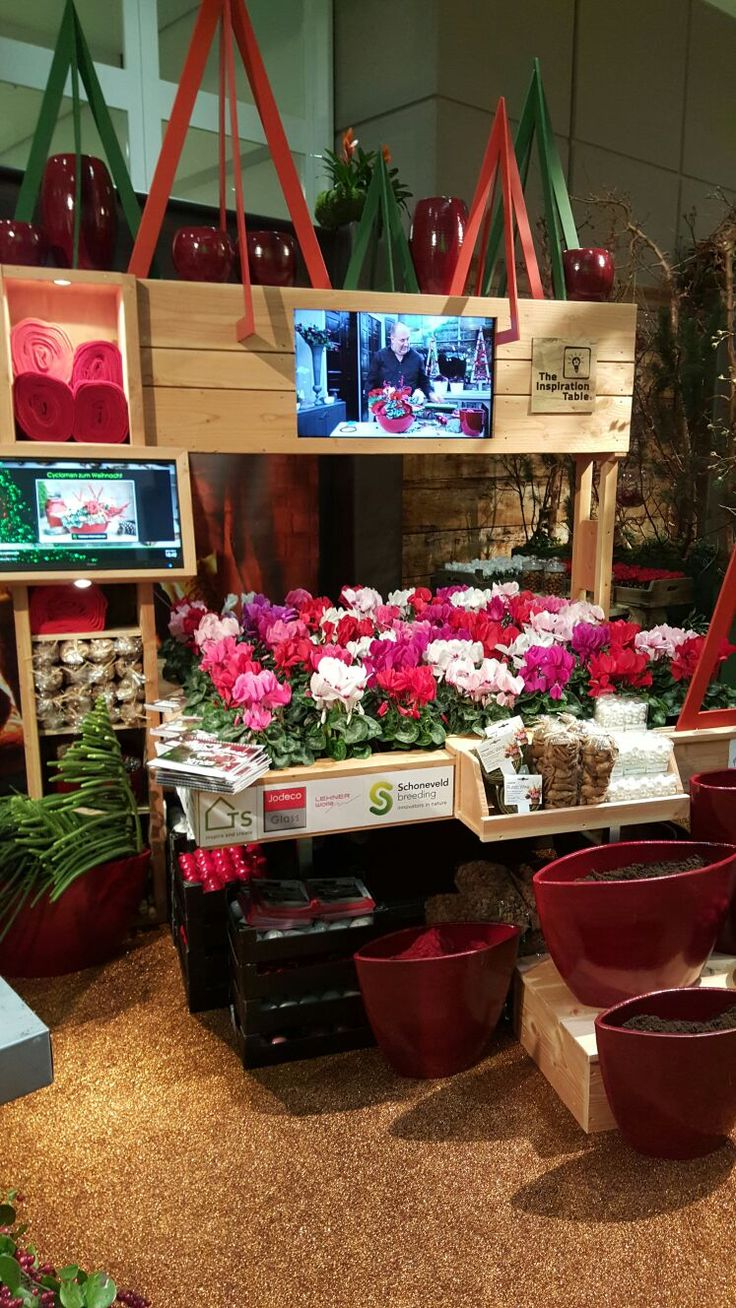 inspration with Inspiration Table, cyclamen Super Serie at Christmasworld 2016 Frankfurt