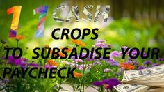 11 cash crops to subsidize your paycheck.