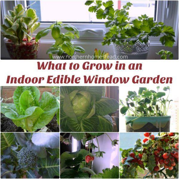 81 best winter indoor gardening images on pinterest indoor what to grow in an indoor edible window garden workwithnaturefo