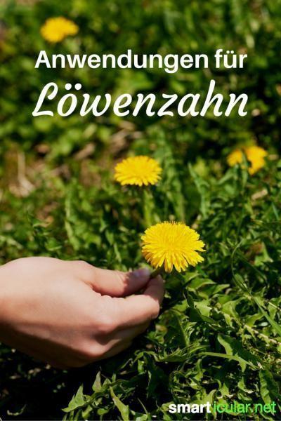 Löwenzahn – Eine kraftvolle Pflanze für Küche und Gesundheit – smarticular.net