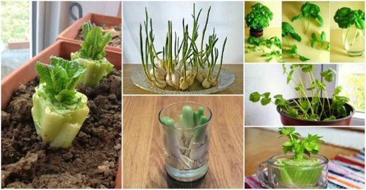 13 Zelenina, ktoré môžete Vypestujte znova a znova
