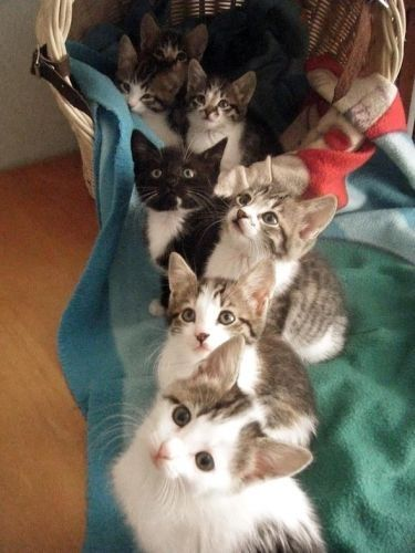 awesome pics: Every life should have 9 cats.