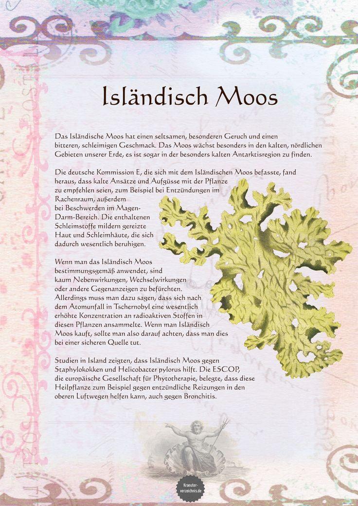 Isländisch Moos