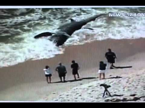 The megalodon still alive. The biggest shark ever seen - YouTube