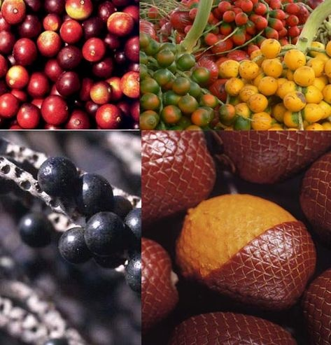 77 best images about frutas tropicales y ex ticas tropical and exotic fruits on pinterest - Frutas tropicales y exoticas ...