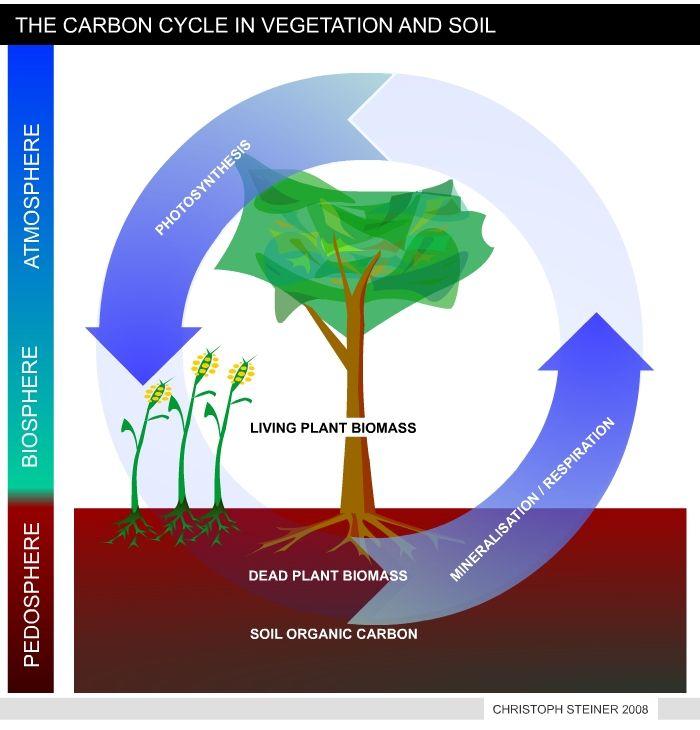 Simple Carbon Cycle | Biochar Carbon Sequestration ...