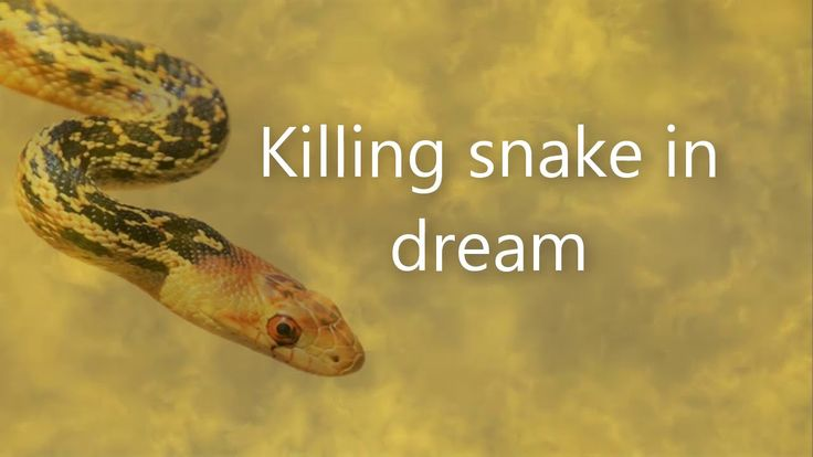 Killing snake in dream  |  Dreams Meaning and Interpretation
