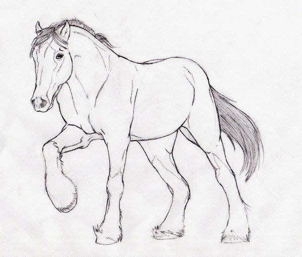 305 besten color horses donkeys mules and tack bilder for Clydesdale coloring pages