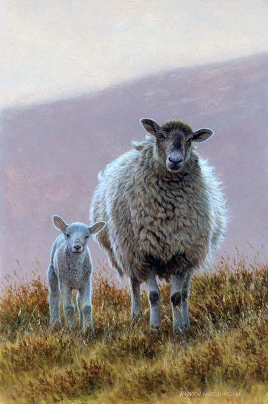 L'Assommoir Sheep and Lamb by Andrew Hutchinson