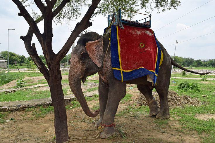 We urge celebrities not to ride elephants