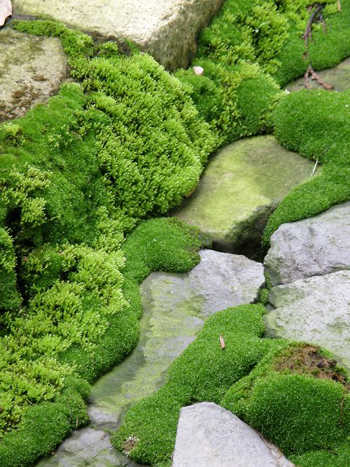 moss green moss in my garden pinterest jardins appartements et jardin de mousse. Black Bedroom Furniture Sets. Home Design Ideas