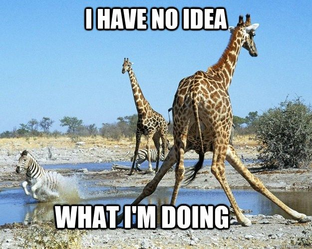 e50923fd0db55fda32996d670ff4065f funny giraffe giraffes best 25 giraffe meme ideas on pinterest funny giraffe pictures,Giraffe Meme
