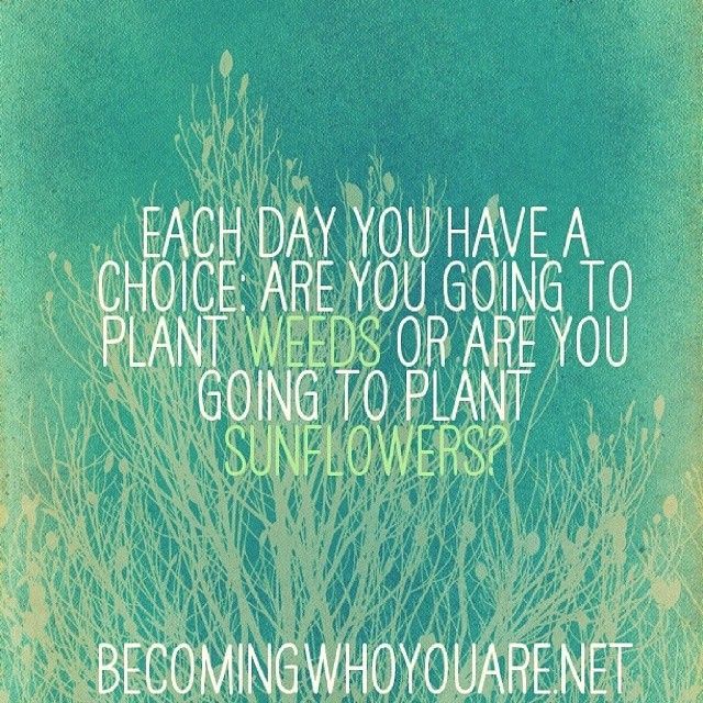 Each day you have a choice: are you going to plant weeds or are you going to plant sunflowers?  becomingwhoyouare.net. #retreat #quote #wisdom #inspiration #choice #mindfulness