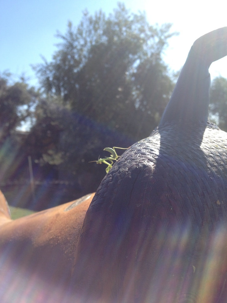 Little passenger on my saddle.