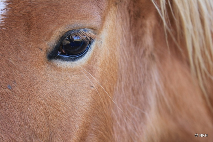 Tiddler, the pony