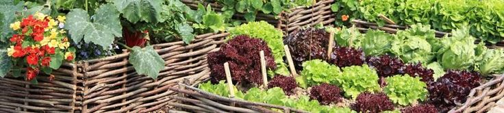 Organic Seeds, Organic Vegetable Seeds, Vegetable Seeds - can order by clicking on this image