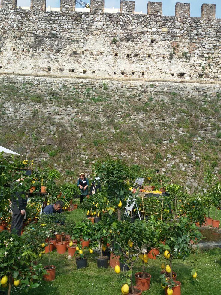 La rocca di Lonato. Flower exhibition