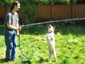 Dog play ideas. The water-hose can also be used to create a fun chasing game for our dog