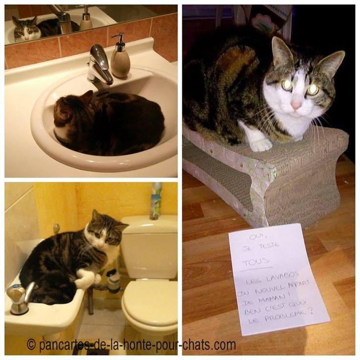ha ha votre mascotte Sookie aime les lavabos ! TOUS :)