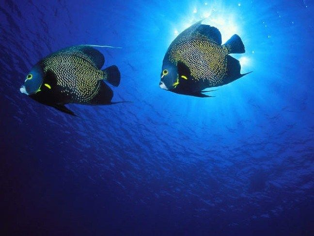 GO GREEN TIP #101: How to Choose a Responsible SCUBA Diving Operator