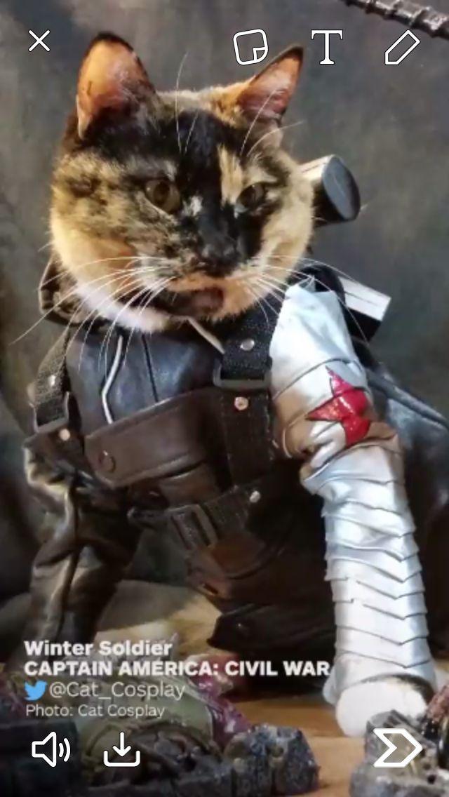 Bucky cat