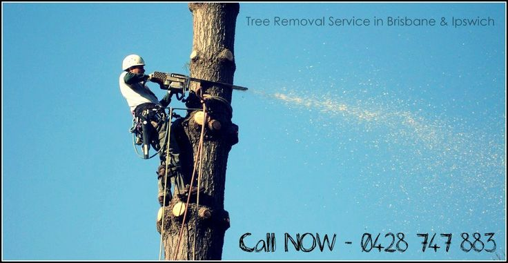 #TreeRemoval service is actually referred to the job of removing #tree stumps after felling of the tree. Also the tree that has been cut down is disposed properly in the process. The work is not as easy as it sounds yet there are professionals who are experts in handling these issues. #Ipswich #Brisbane #Australia