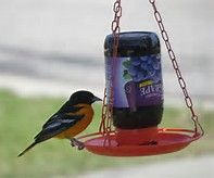 homemade oriole jelly feeder - Bing images