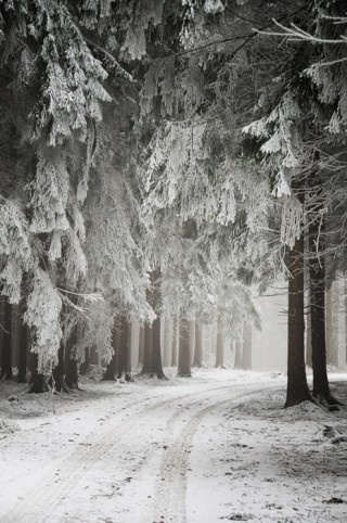 to walk in this winterland would be heaven.