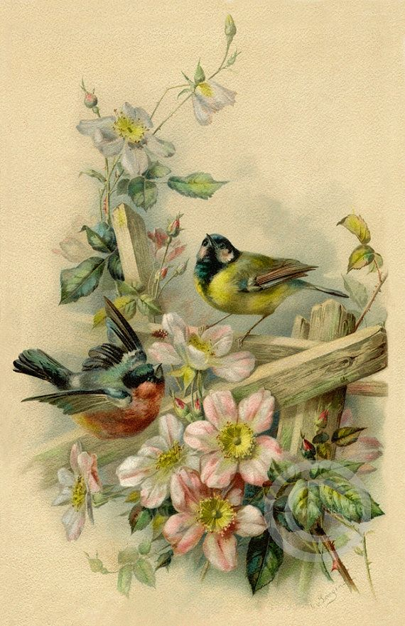 Victorian Vintage Style Birds and Flowers Print, Old time Roses, Garden fence, …